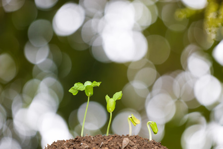 seeding: Agriculture, Seeding, Plant seed growing concept with organic compost fertilizer Stock Photo