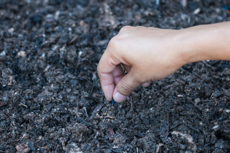 nurture: Farmers hand planting a seed in soil