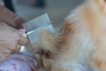 comb: woman using a comb brush a dog Stock Photo