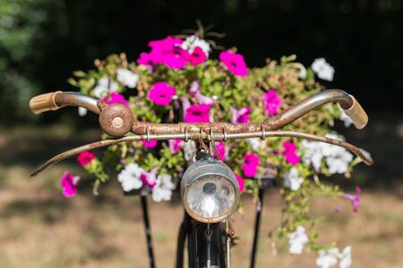 Old bicycle and fresh flowers