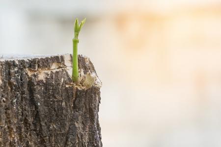 Green plant growing on dead tree trunk