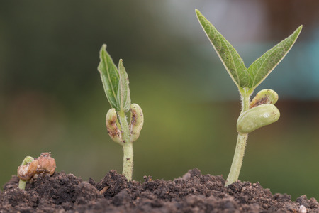 Seeding Plant seed growing step concept