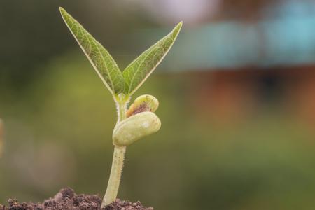 planta jovem crescendo no solo, conceito de ecologia