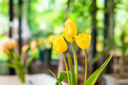 tulips flower on bokeh background Imagens