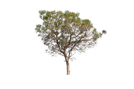 Tree  isolated on white background Imagens