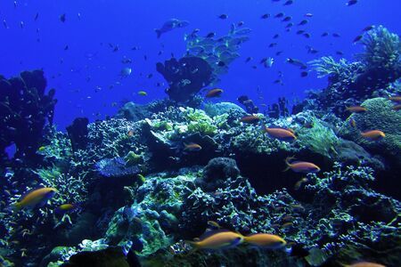 pictures of wild animals under the sea, Indonesia  photo