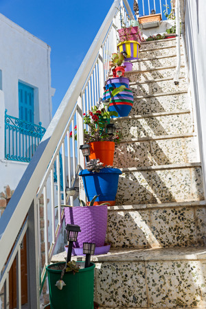 steps and staircases: High ladder decorated with colourful flower pots