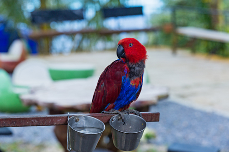 Beautiful red and blue macaw in zoo
