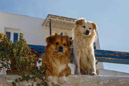 Two dogs in Greece guarding the house