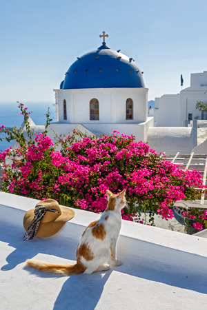 Cat on the island of Santorini looking at the sea