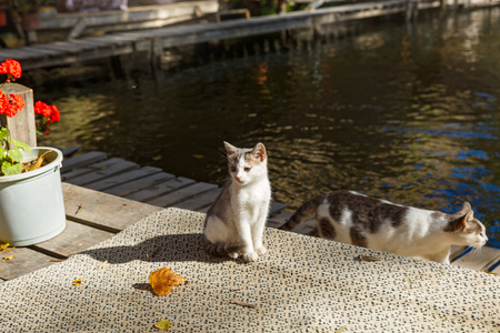 small, homeless kitten and his mother near the pond