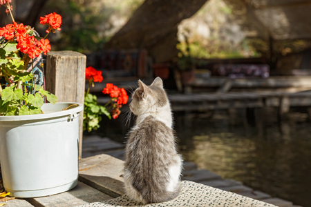 Small, street a homeless kitten sits near the pond Stock Photo