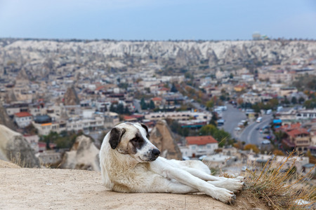 Homeless dog on the background of the city of Turkey