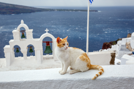 Red cat sitting on the background of the sea and the architecture of Santorini, Greece.