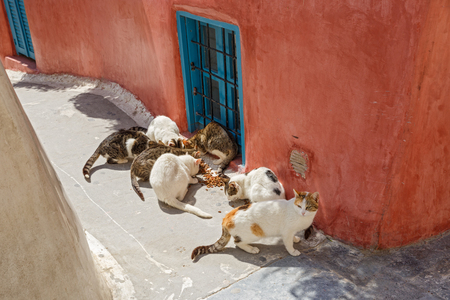 Group of stray cats eating dry food, Greece
