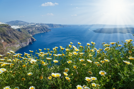Field of daisies on the seaside in Greece Stok Fotoğraf - 123633898