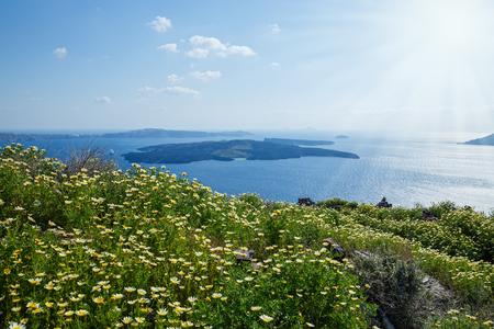 Field of daisies on the seaside in Greece Stok Fotoğraf - 123633869