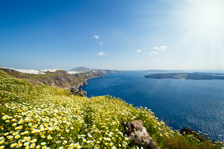 Field of daisies on the beach in Santorini Stok Fotoğraf - 123633848