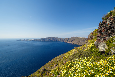 Field of daisies on the beach in Santorini Stok Fotoğraf - 123633850