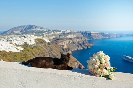 Black cat sleeping on the background of the sea landscape of Greece Stok Fotoğraf