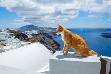 Red cat looks at the sea early in the morning, Santorini island, Greece Banco de Imagens