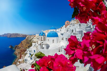 Flowering bougainvillea on the island of Santorini, Greece