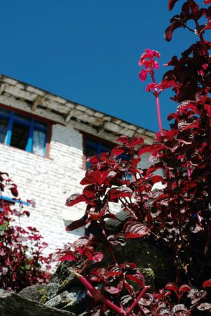 Red leafs and white house,Nepal photo