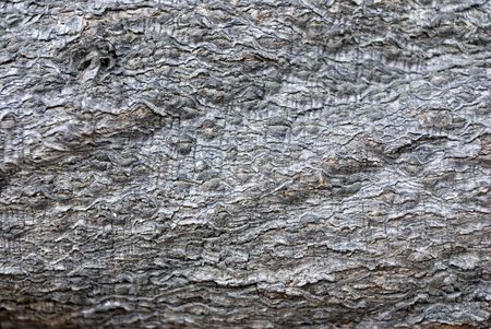 photos of pattern: tree bark textures backgrounds