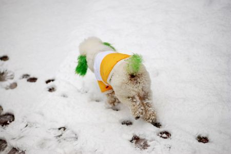 footmark: dog in the snow