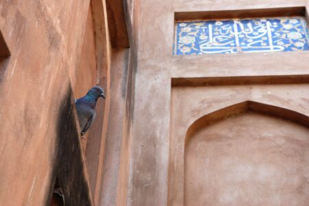 mughal empire: Doves on the building