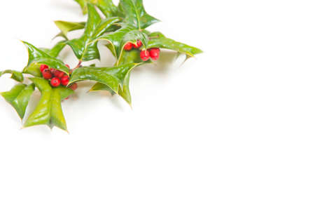 hollyberry: Christmas framework with holly berry isolated on white background