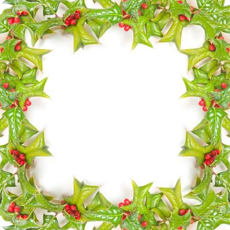 hollyberry: Christmas frame   Stock Photo