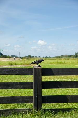 Bird on wooden fence of Amsterdam,netherland Stock Photo - 8370719