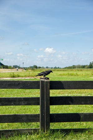 Bird on wooden fence of Amsterdam,netherland Stock Photo - 8370719