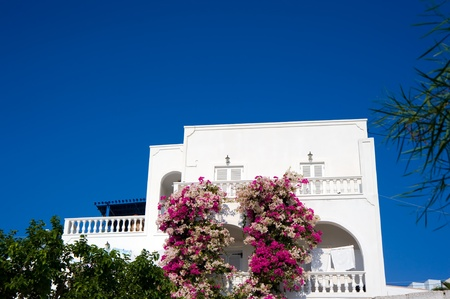 Flower of a traditional Greek house on Santorini island   photo