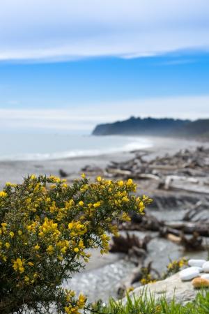 new zealand beach: Bruce bay,Tasman Sea,South island, New Zealand