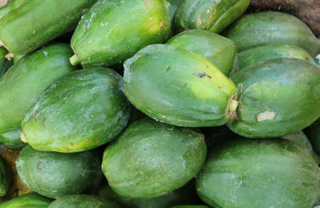 Carica papaya, many green colour fresh papaya in the vegetable market with papaya background.