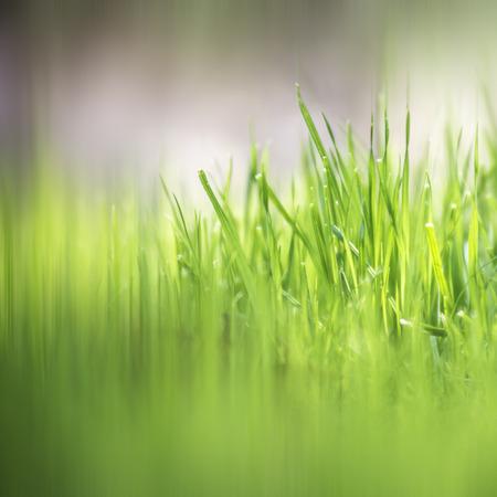 Voorjaar grass