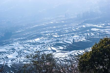 yunnan: China Yunnan Terrace scenery