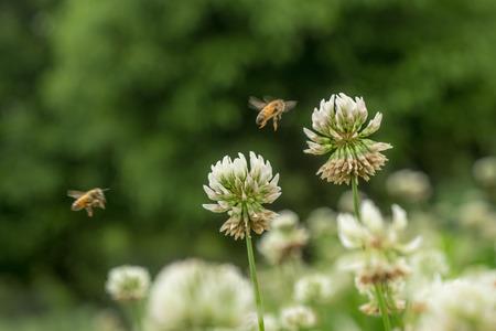 petites fleurs: Les petites fleurs dans le parc Banque d'images
