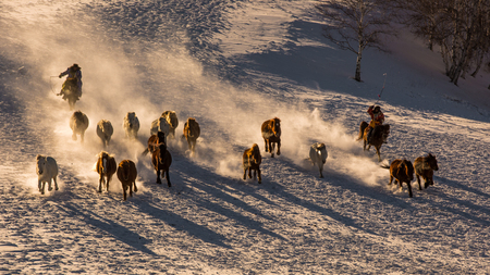A herd of horses galloping on the steppe. 版權商用圖片