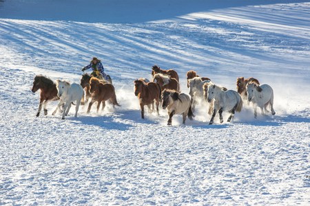 A herd of horses galloping on the steppe. Stock Photo