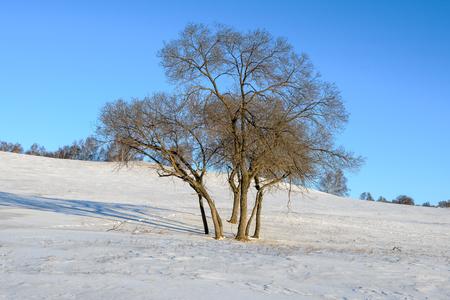 Inner Mongolia Chifeng City, Hexigten Banner China Ulan Buh winter grassland scenery Stockfoto