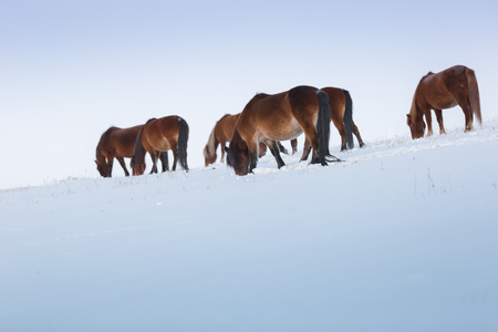 Horses grazing on the steppe. Banque d'images