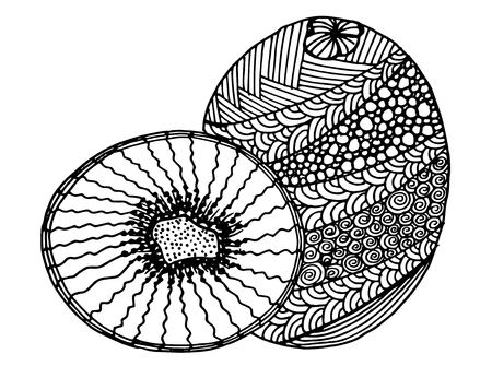 Kiwi fruit. Hand-drawn cartoon fruit sketch. Doodle drawing. Vector illustration Illustration