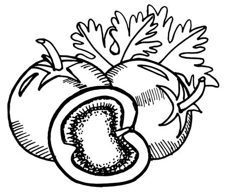 Tomatoes doodle. Hand-drawn illustration converted to vector.
