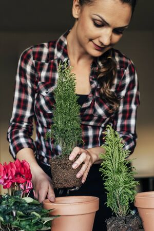 replanting: Womans hands transplanting plant a into a new pot. Stock Photo