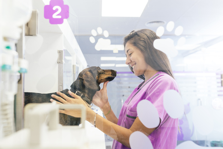 reviews: Veterinarian doctor hugging a beautiful dog. Veterinary Concept. Stock Photo