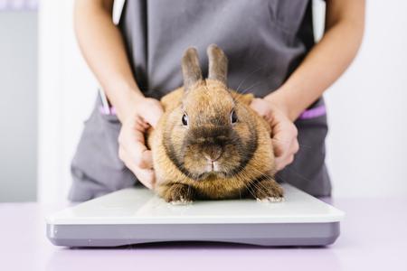수의사 의사가 토끼를 확인하고있다. 수의학 개념. 스톡 콘텐츠