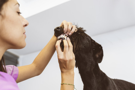 Veterinarian doctor is making a check up of a cute beautiful dog. Veterinary Concept.